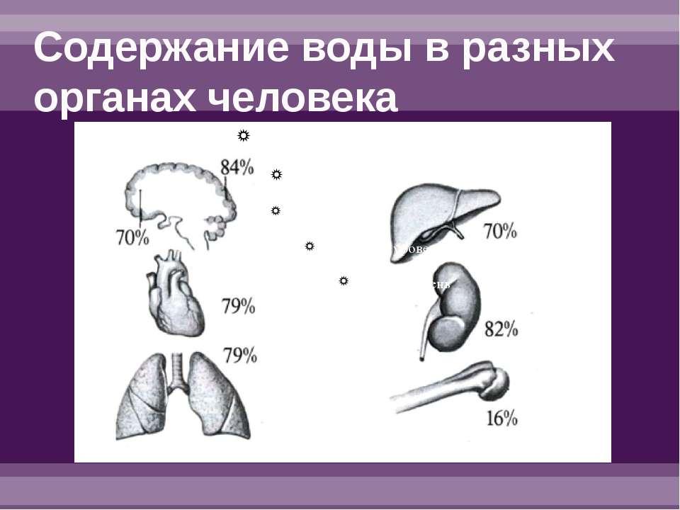 Содержание воды в разных органах человека