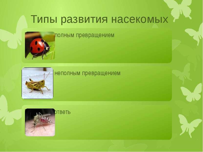 Развитие с полным превращением Яйцо Личинка Куколка Взрослое насекомое
