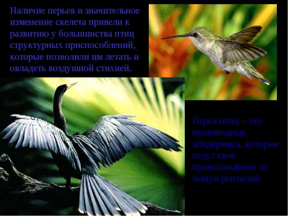 Наличие перьев и значительное изменение скелета привели к развитию у большинс...
