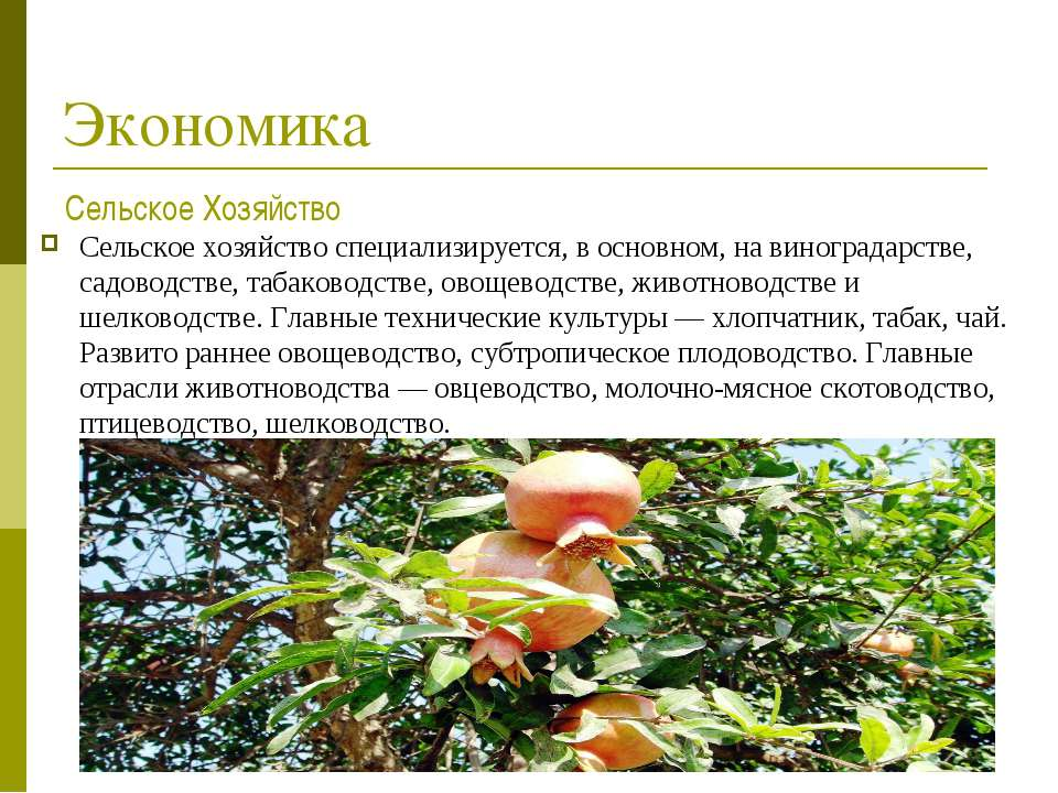 Экономика Сельское хозяйствоспециализируется, в основном, на виноградарстве,...