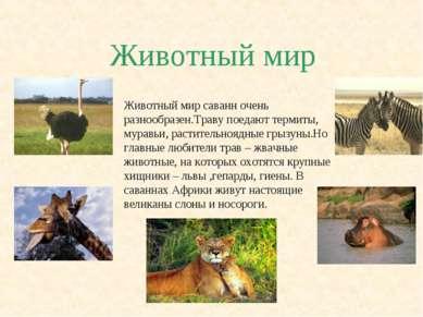 Животный мир Животный мир саванн очень разнообразен.Траву поедают термиты, му...