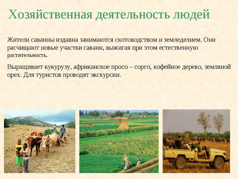 Хозяйственная деятельность людей Жители саванны издавна занимаются скотоводст...