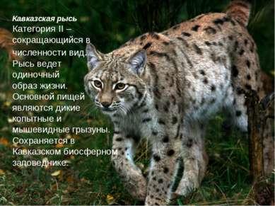 Кавказская рысь Категория II – сокращающийся в численности вид. Рысь ведет од...