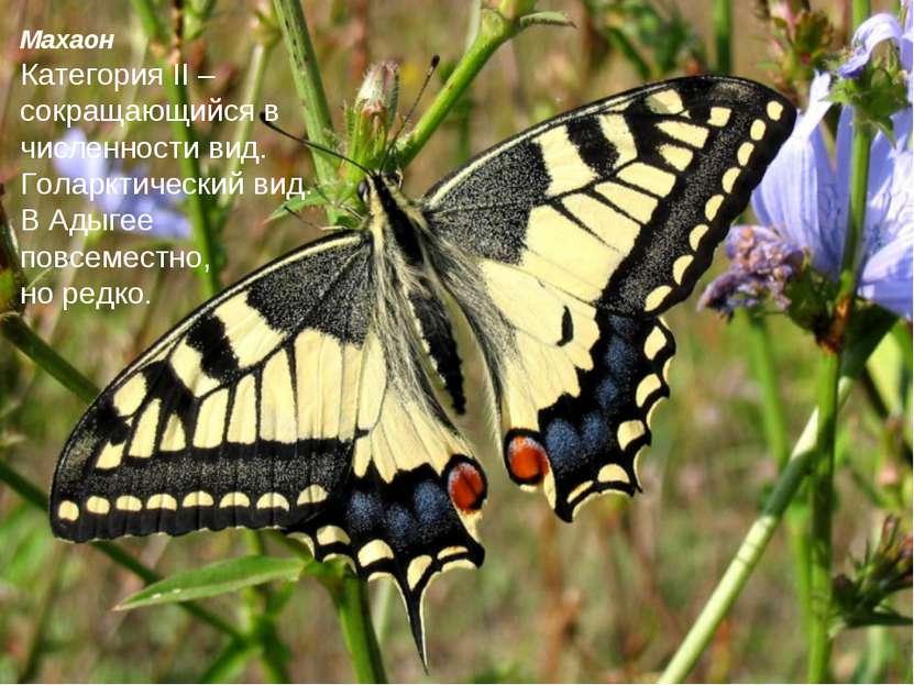 Махаон Категория II – сокращающийся в численности вид. Голарктический вид. В ...