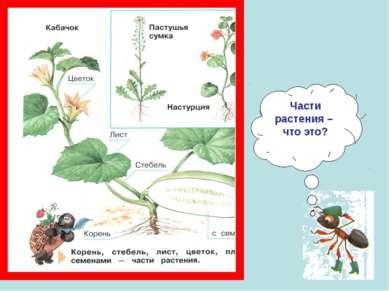 Части растения – что это?