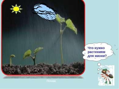 Почва Что нужно растениям для жизни?