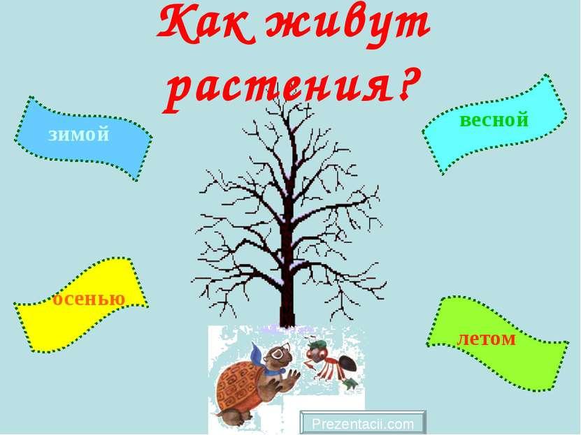 Как живут растения? Prezentacii.com зимой летом осенью весной