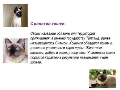 Сиамские кошки. Своим название обязаны они территории проживания, а именно го...