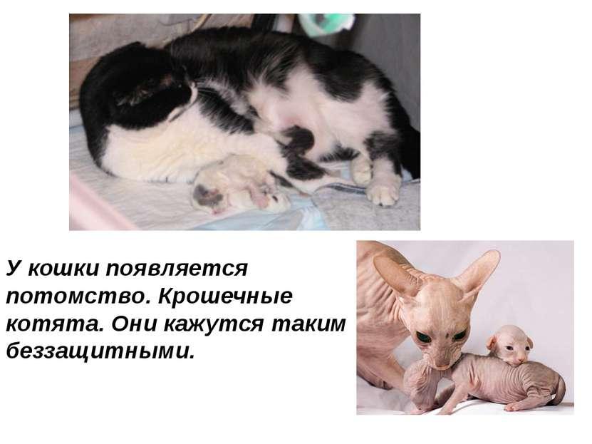 У кошки появляется потомство. Крошечные котята. Они кажутся таким беззащитными.