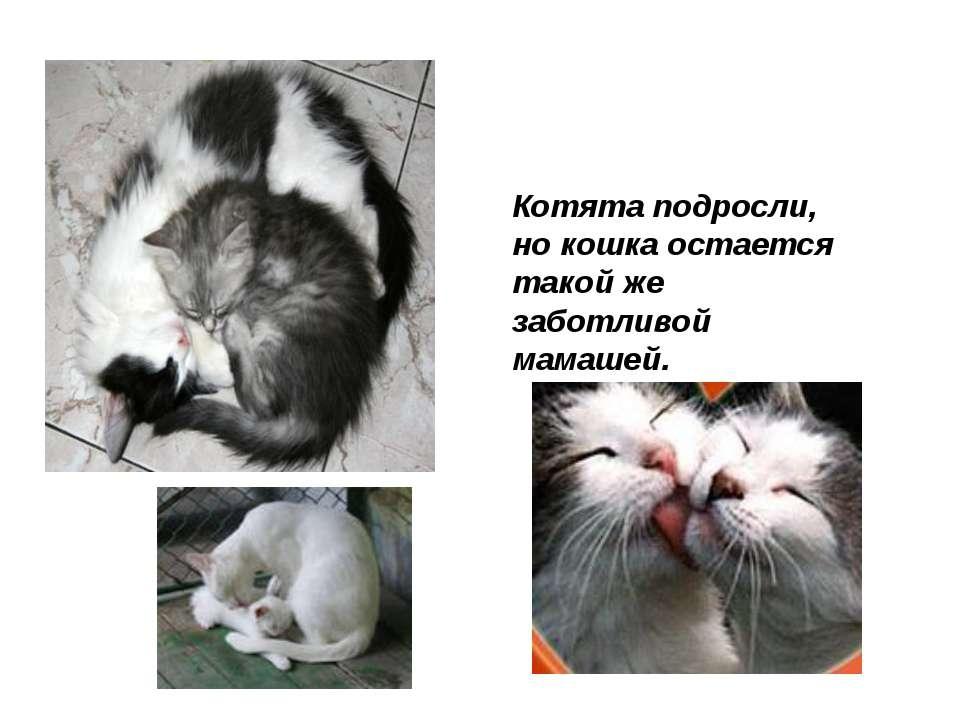 Котята подросли, но кошка остается такой же заботливой мамашей.