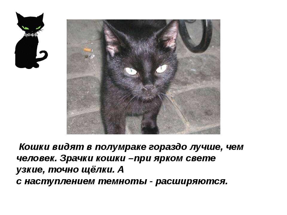 Кошки видят в полумраке гораздо лучше, чем человек. Зрачки кошки –при ярком с...