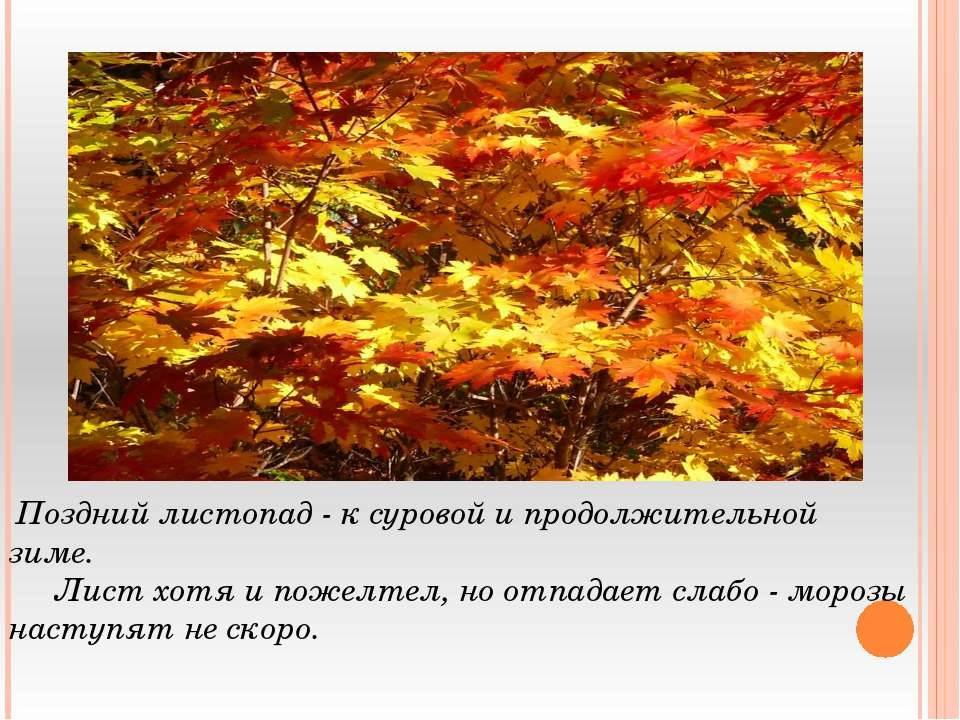Поздний листопад - к суровой и продолжительной зиме. Лист хотя и пожелтел, но...