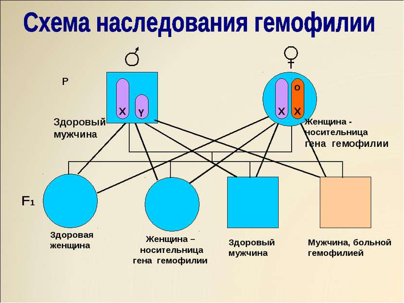 X Y X O X X X X o X X Y o X Y P Здоровый мужчина Женщина - носительница гена ...