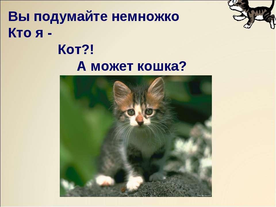 Вы подумайте немножко Кто я - Кот?! А может кошка?