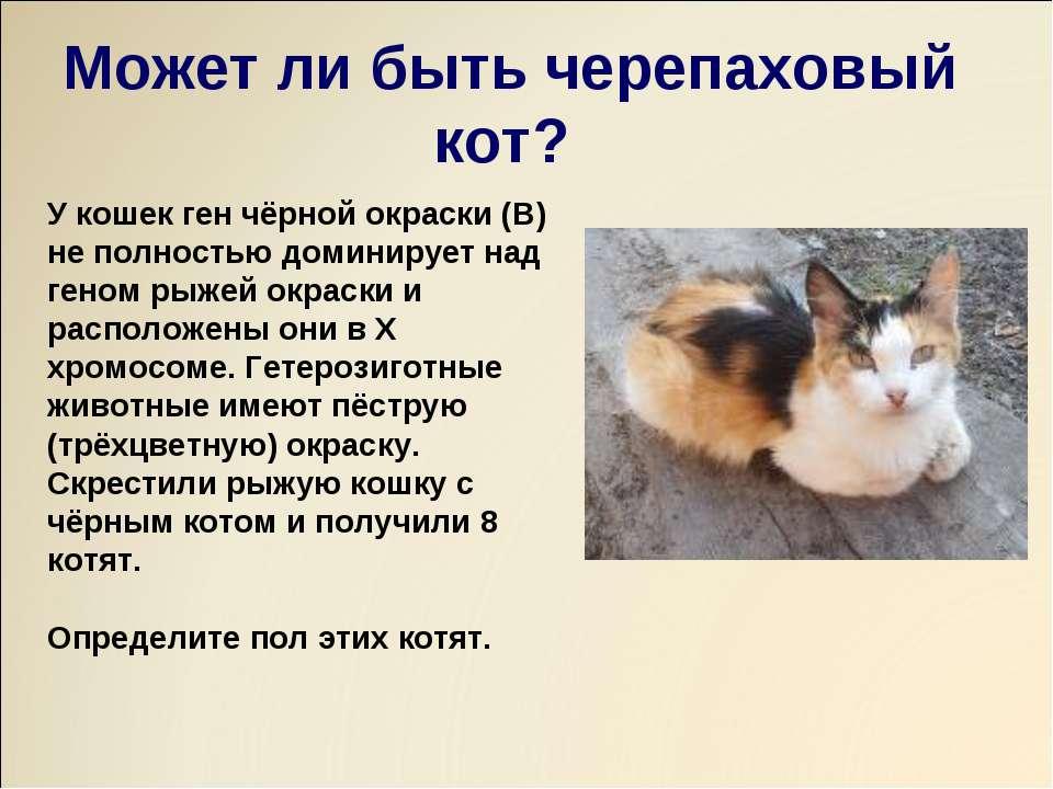 У кошек ген чёрной окраски (В) не полностью доминирует над геном рыжей окраск...