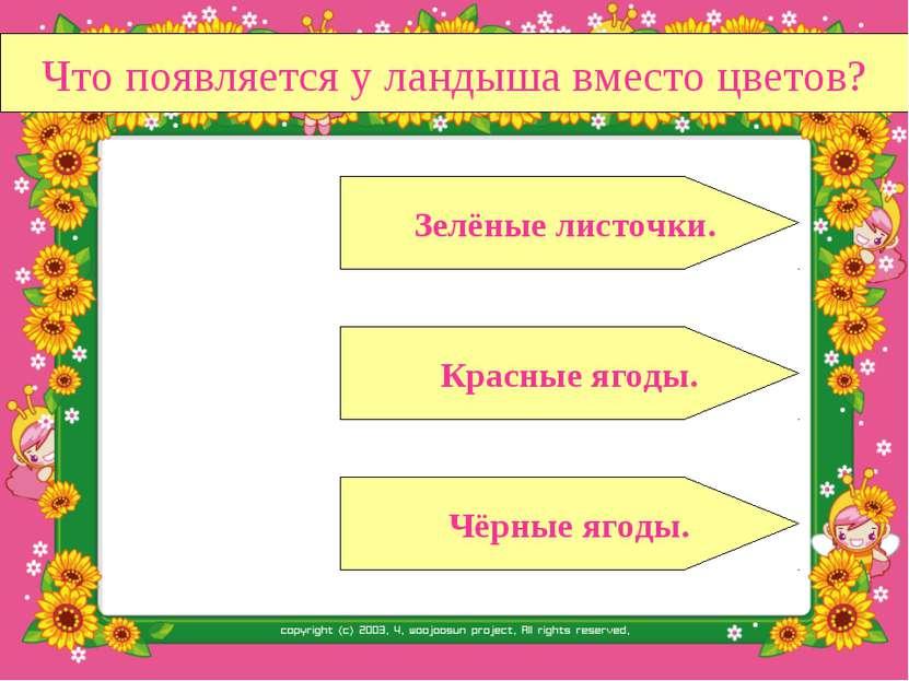 Что появляется у ландыша вместо цветов? Красные ягоды. Чёрные ягоды. Зелёные ...
