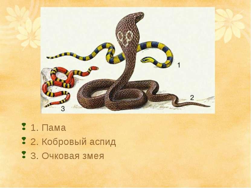 1. Пама 2. Кобровый аспид 3. Очковая змея