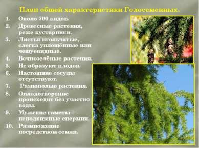 План общей характеристики Голосеменных. Около 700 видов. Древесные растения, ...