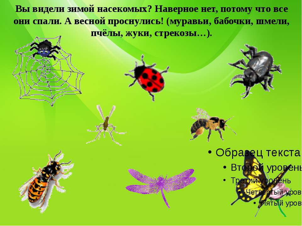 Вы видели зимой насекомых? Наверное нет, потому что все они спали. А весной п...