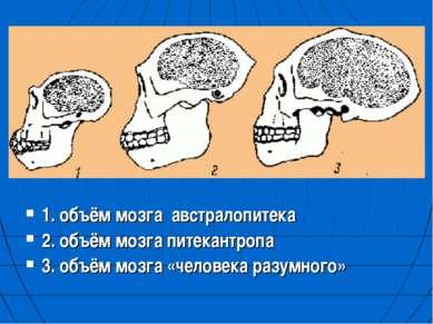 1. объём мозга австралопитека 2. объём мозга питекантропа 3. объём мозга «чел...