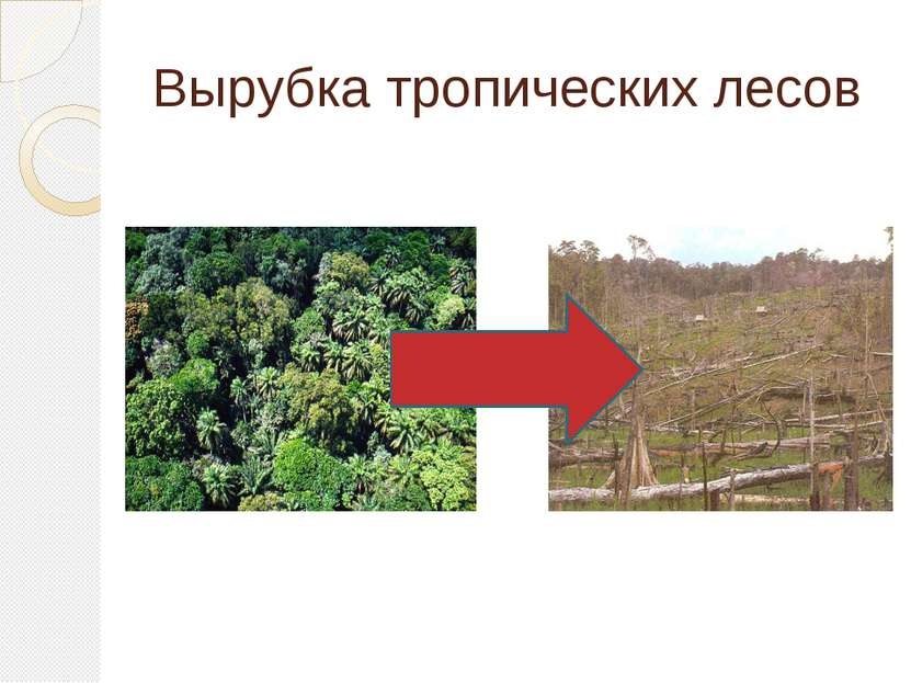 Вырубка тропических лесов