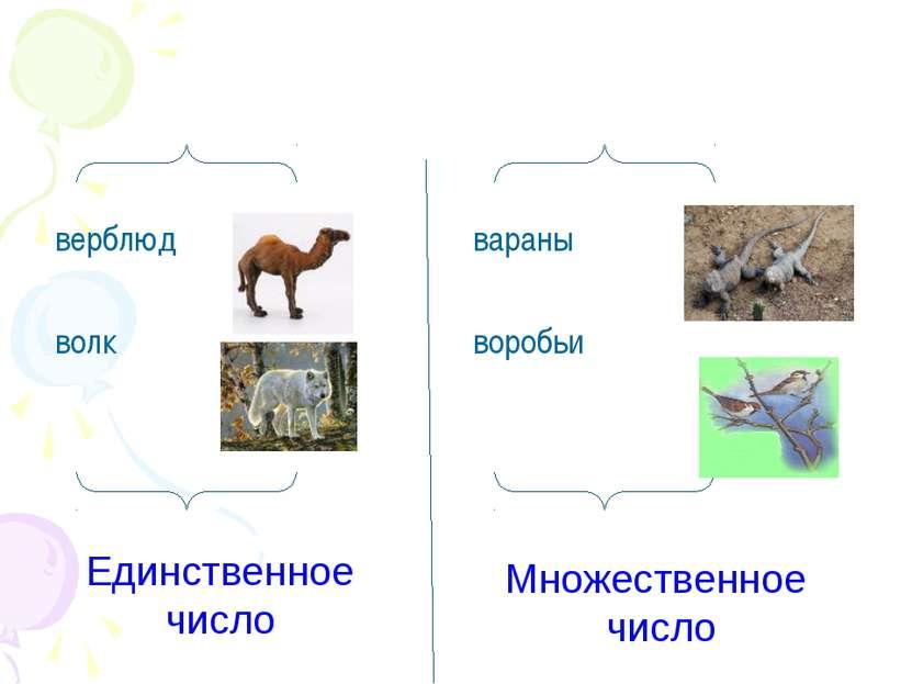верблюд волк вараны воробьи Единственное число Множественное число