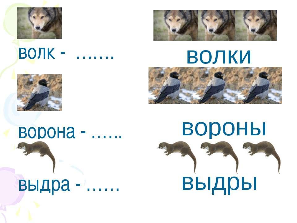 волк - ……. ворона - .….. выдра - …… волки вороны выдры