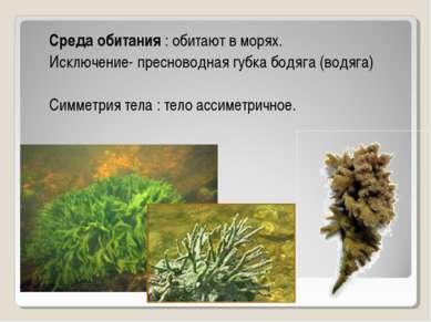 Среда обитания : обитают в морях. Исключение- пресноводная губка бодяга (водя...