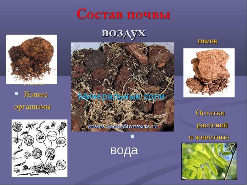 Глина Живые организмы песок Остатки растений и животных вода Минеральные соли