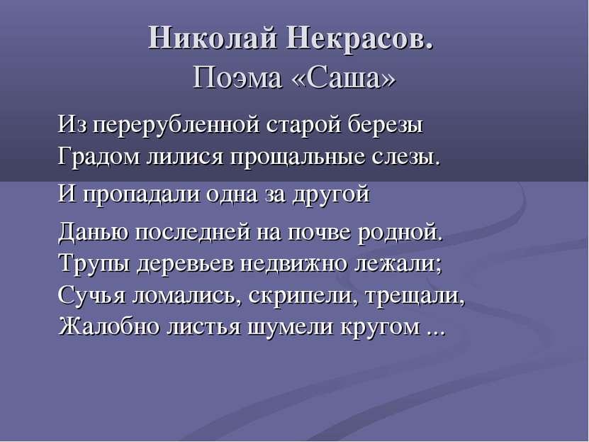 Николай Некрасов. Поэма «Саша» Из перерубленной старой березы Градом лилися п...