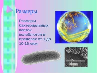 Размеры Размеры бактериальных клеток колеблются в пределах от 1 до 10-15 мкм