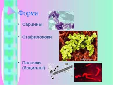 Форма Сарцины Стафилококи Палочки (бациллы)