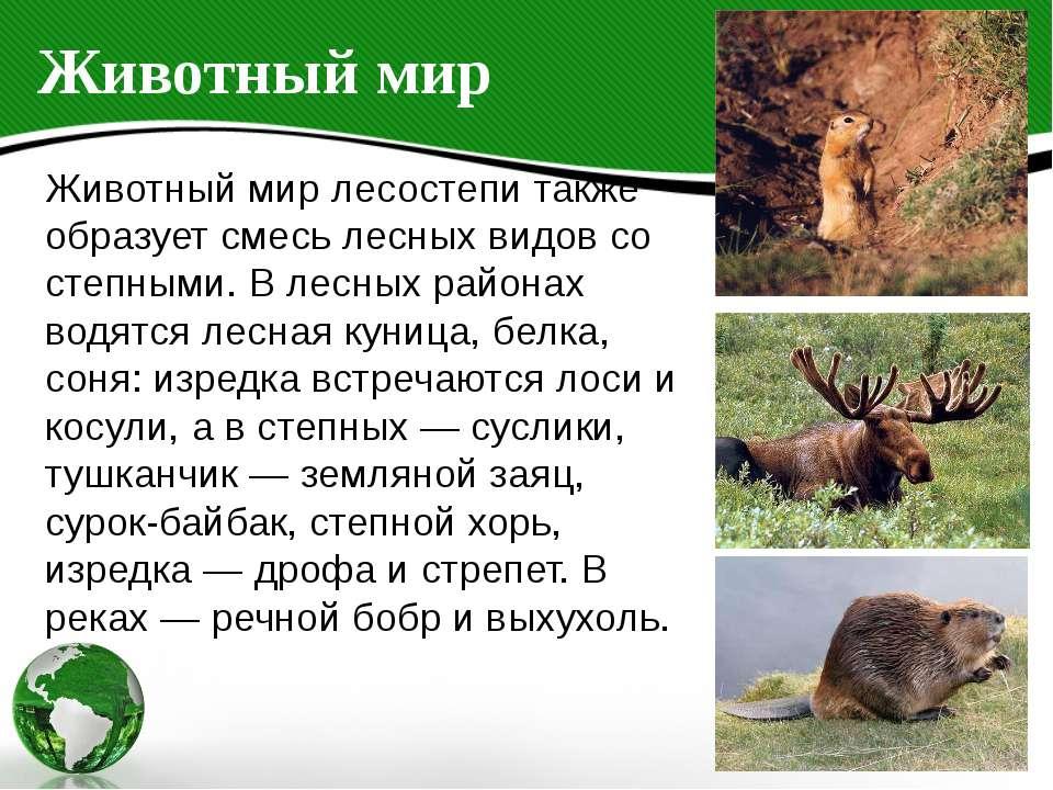 Животный мир Животный мир лесостепи также образует смесь лесных видов со степ...