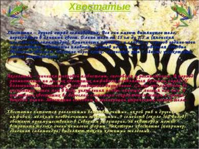Хвостатые Хвостатые – другой отряд земноводных. Все они имеют вытянутое тело,...