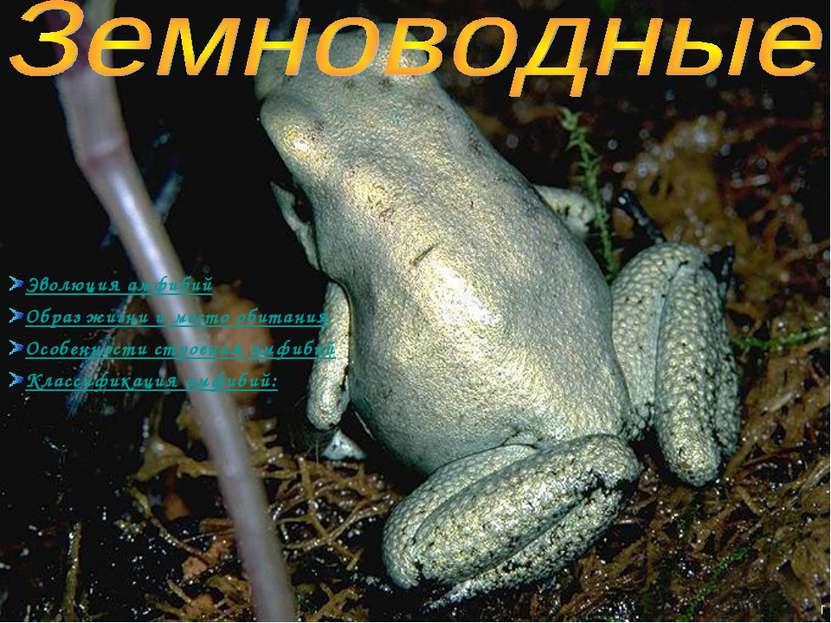 Эволюция амфибий Образ жизни и место обитания Особенности строения амфибий Кл...