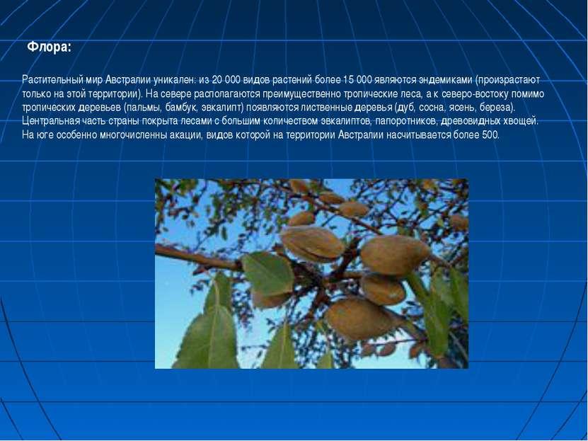 Флора: Растительный мир Австралии уникален: из 20 000 видов растений более 15...