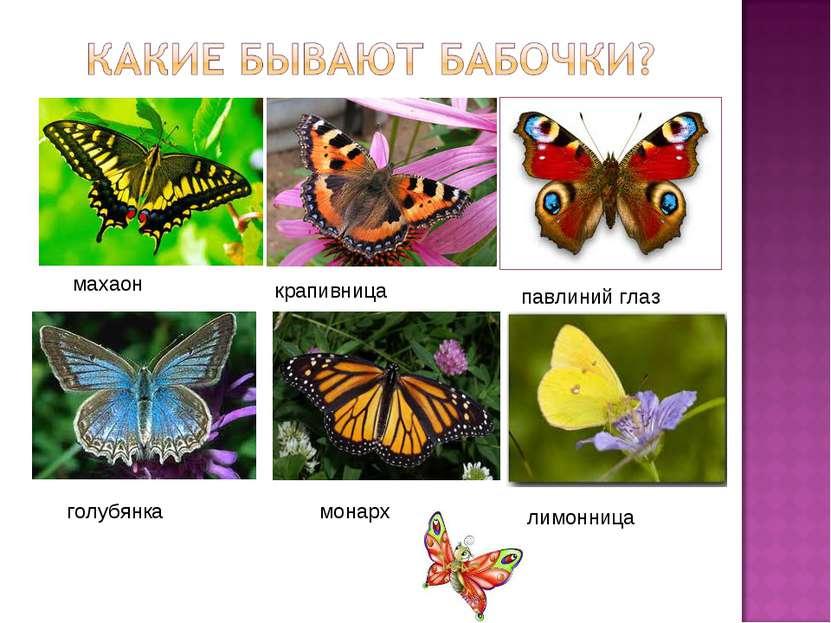 монарх махаон павлиний глаз крапивница лимонница голубянка