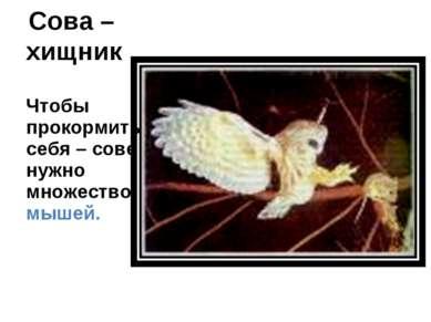 Сова – хищник Чтобы прокормить себя – сове нужно множество мышей.