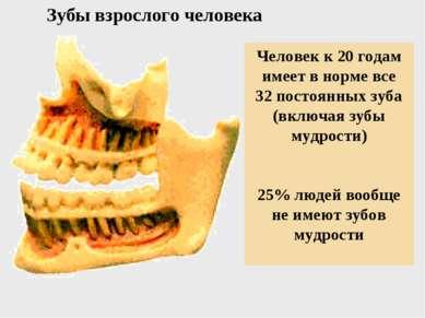 Зубы взрослого человека Человек к 20 годам имеет в норме все 32 постоянных зу...