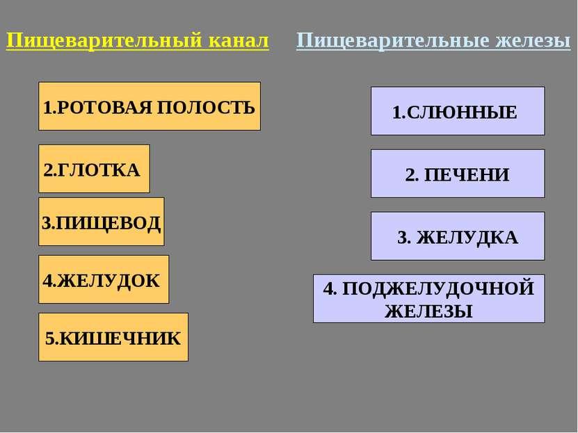 1.РОТОВАЯ ПОЛОСТЬ 2.ГЛОТКА 3.ПИЩЕВОД 4.ЖЕЛУДОК 5.КИШЕЧНИК Пищеварительный кан...