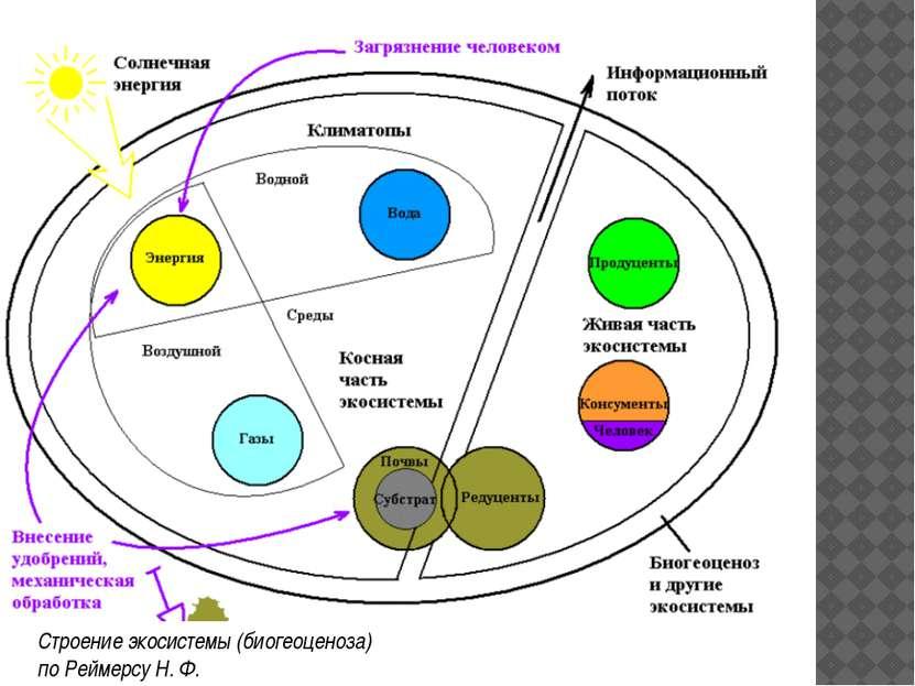 Основные компоненты экосистемы С точки зрения структуры в экосистеме выделяют...