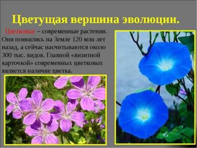 Цветущая вершина эволюции. Цветковые – современные растения. Они появились на...