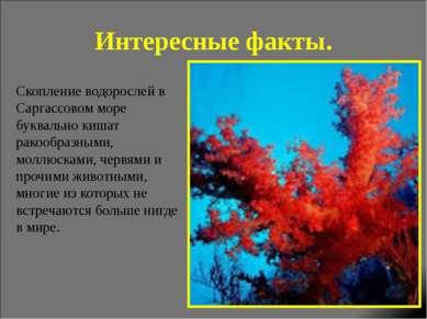 Интересные факты. Скопление водорослей в Саргассовом море буквально кишат рак...