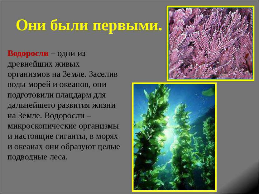 Они были первыми. Водоросли – одни из древнейших живых организмов на Земле. З...