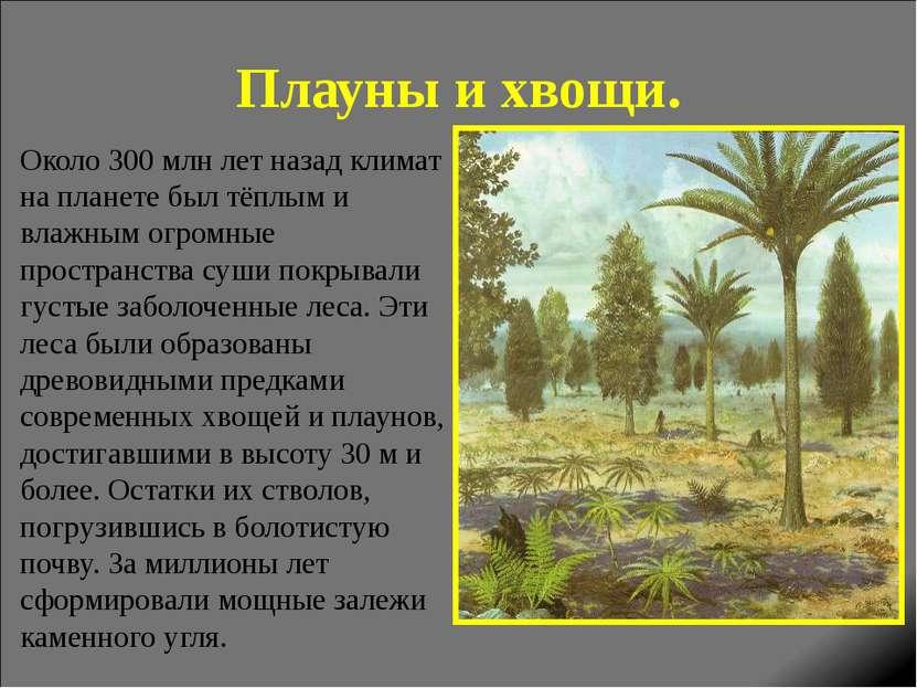 Плауны и хвощи. Около 300 млн лет назад климат на планете был тёплым и влажны...