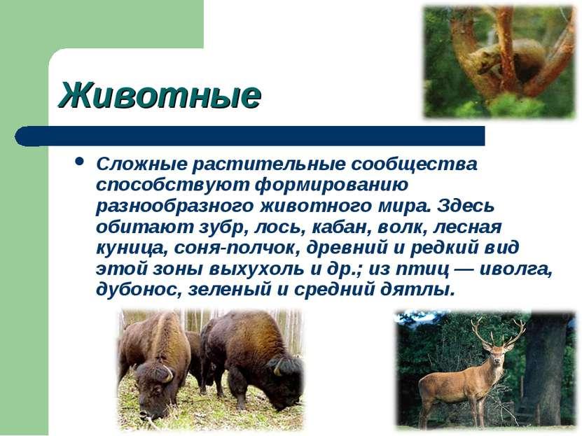 Животные Сложные растительные сообщества способствуют формированию разнообраз...