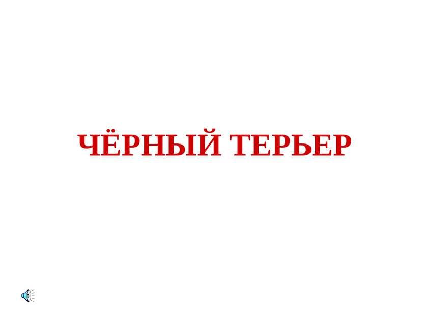 ЧЁРНЫЙ ТЕРЬЕР