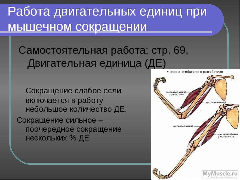 Работа двигательных единиц при мышечном сокращении Самостоятельная работа: ст...