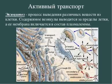 Активный транспорт Экзоцитоз - процесс выведения различных веществ из клетки....