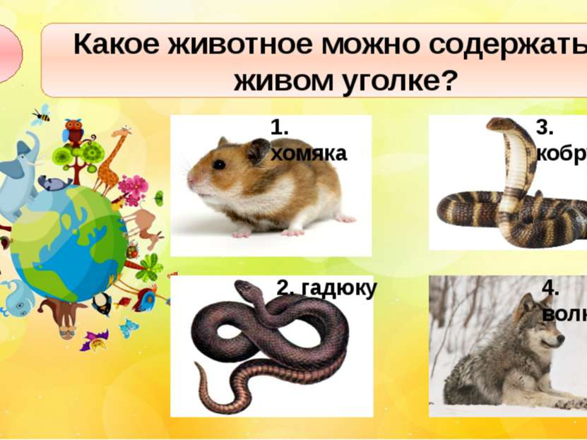 Какое животное можно содержать в живом уголке? А1 2. гадюку 3. кобру 4. волка...